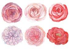 Sistema de rosas y de peonías Foto de archivo