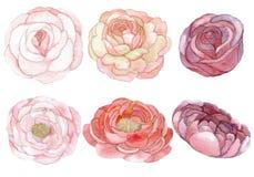 Sistema de rosas y de peonías Ilustración del Vector