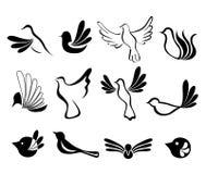 Sistema de símbolo abstracto del pájaro Fotos de archivo libres de regalías