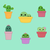 Sistema de seis plantas lindas del cactus Foto de archivo