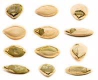 Sistema de semillas de calabaza aisladas Fotos de archivo libres de regalías