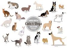 Sistema de sentada plana o perros lindos de la historieta que caminan y perros Razas populares Iconos aislados diseño plano del e fotos de archivo