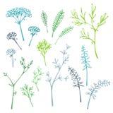 Sistema de siluetas de la hierba stock de ilustración