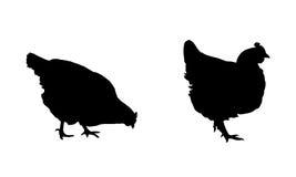 Sistema de siluetas negras que caminan, mirando y picoteando las gallinas y los pollos aislados en el fondo blanco Fotografía de archivo