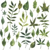 Sistema de siluetas por las hojas en acuarela Foto de archivo libre de regalías
