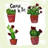 Sistema de Succulents del verde de la acuarela con rojo Imagen de archivo libre de regalías