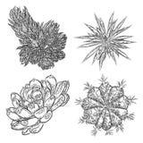 Sistema de succulents, ramo del cactus, dibujos de Echeveria, botánicos Imagen de archivo