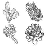 Sistema de succulents, ramo del cactus, dibujos de Echeveria, botánicos Imagenes de archivo