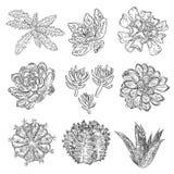 Sistema de succulents, ramo del cactus, dibujos de Echeveria, botánicos Foto de archivo libre de regalías