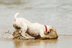 Sistema de travagem do cão Imagem de Stock