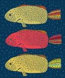 Sistema de tres pescados coloreados Fotografía de archivo