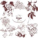 Sistema de uvas de los dibujos ilustración del vector