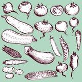 Sistema de verduras del dibujo Imagen de archivo libre de regalías