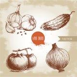 Sistema de verduras dibujadas mano Tomates, cebolla, pepino y ajos Fotos de archivo