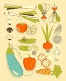 Sistema de verduras en estilo del vintage Fotos de archivo libres de regalías