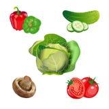 Sistema de verduras estacionales Ilustración del vector Fotografía de archivo