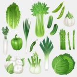 Sistema de verduras verdes frescas Ejemplo sano del vector de la comida Imagen de archivo libre de regalías