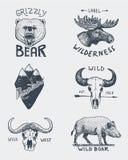 Sistema de vintage grabado, mano dibujada, vieja, etiquetas o insignias para acampar, el caminar, cazando con el oso grizzly, alc ilustración del vector
