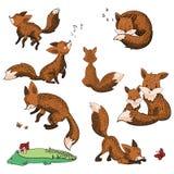 Sistema de zorros de la historieta Colección de zorros lindos Ejemplo del vector para los niños Animales salvajes Imágenes de archivo libres de regalías