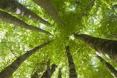 Sistema del ángulo bajo de los árboles Fotografía de archivo libre de regalías