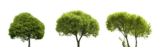 Sistema del árbol coloreado de la silueta aislado en blanco Imagen de archivo