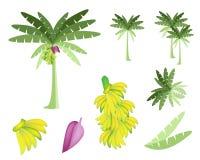 Sistema del árbol de plátano con los plátanos y el flor Imágenes de archivo libres de regalías