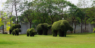 Sistema del arbusto en el elefante formado Fotos de archivo libres de regalías