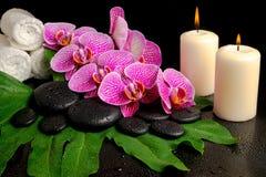 Sistema del balneario de la ramita floreciente de la orquídea violeta pelada Imagen de archivo