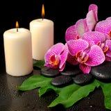 Sistema del balneario de la ramita floreciente de la orquídea violeta pelada Fotografía de archivo libre de regalías
