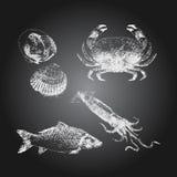 Sistema del bosquejo del dibujo de la pizarra de los mariscos Imagenes de archivo