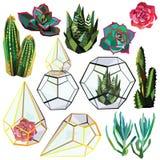 Sistema del cactus Imagenes de archivo
