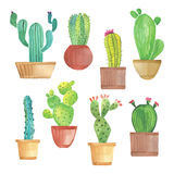 Sistema del cactus de la acuarela Fotografía de archivo