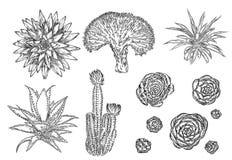 Sistema del cactus del dibujo Elementos suculentos de los ramos para las invitaciones, Imagen de archivo libre de regalías