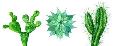 Sistema del cactus tres aislado en el blanco, ejemplo de la acuarela Fotos de archivo