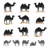 Sistema del camello Vector Fotos de archivo libres de regalías
