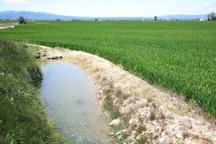 Sistema del canal de la irrigación en el campo España del arroz foto de archivo