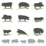 Sistema del cerdo Vector Imagen de archivo