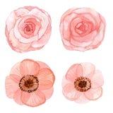 Sistema del dibujo de la acuarela de las flores Imágenes de archivo libres de regalías