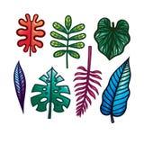 Sistema del dibujo de la mano del color de hojas tropicales Foto de archivo