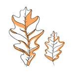 Sistema del dibujo del vector de la hoja Hojas aisladas del árbol Ejemplo grabado herbario del estilo Bosquejo orgánico del produ Foto de archivo libre de regalías
