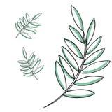 Sistema del dibujo del vector de la hoja Hojas de palma Ejemplo grabado herbario del estilo Bosquejo orgánico del producto Mano d Imágenes de archivo libres de regalías
