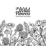 Sistema del dibujo del vector de las flores salvajes Plantas y hojas aisladas del prado ilustración del vector