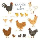 Sistema del ejemplo de los pollos y de los polluelos Foto de archivo