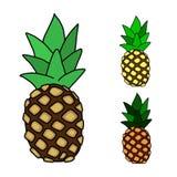 Sistema del ejemplo del vector de la piña Fruta tropical dibujada mano Fotos de archivo