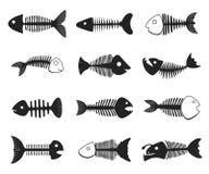 Sistema del esqueleto de los pescados ilustración del vector