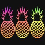 Sistema del esquema de la pendiente de la fruta tropical de la piña del vector Imagen de archivo libre de regalías