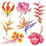 Sistema del estilo de la acuarela de flores exóticas Colección brillante botánica de la naturaleza aislada en el fondo blanco libre illustration