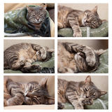 Sistema del gato el dormir Fotos de archivo