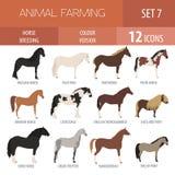 Sistema del icono de la cría de caballo Animal del campo Diseño plano Imágenes de archivo libres de regalías
