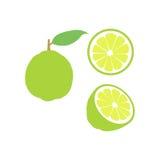 Sistema del icono de la fruta de la cal del vector Aislado en blanco Fotos de archivo libres de regalías